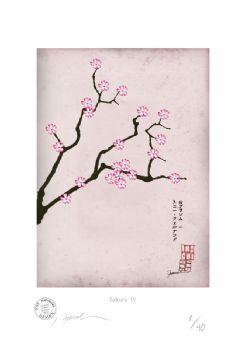 Cherry Blossom Print - Sakura 4